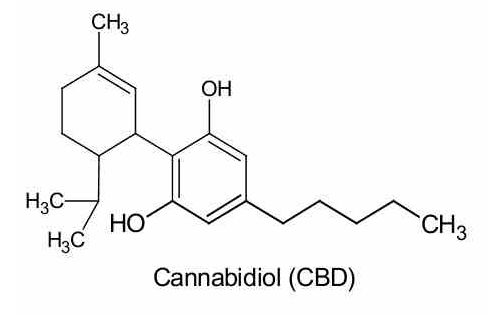 CBD contained in cannabis oil