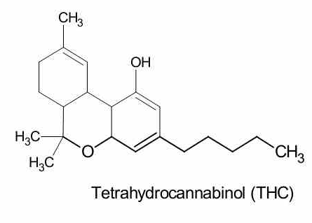 THC contained in cannabis oil