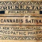 cannabis-satva