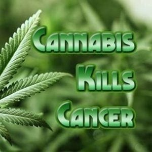 cannabis oil scammers